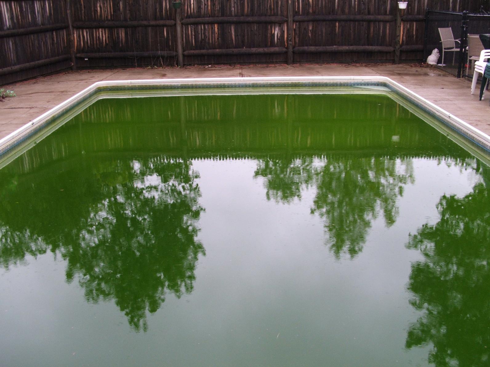 C mo limpiar una piscina con agua verde piscinas iguaz for Recuperar agua piscina verde